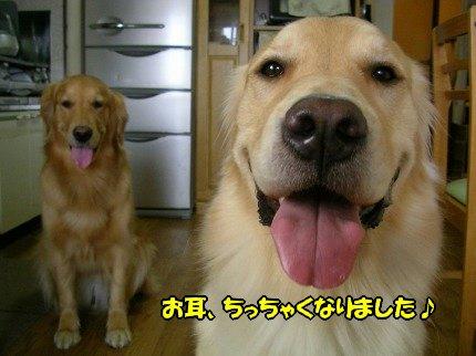 SANY0055_20090612173417.jpg