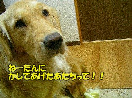 SANY0059_20090213201809.jpg