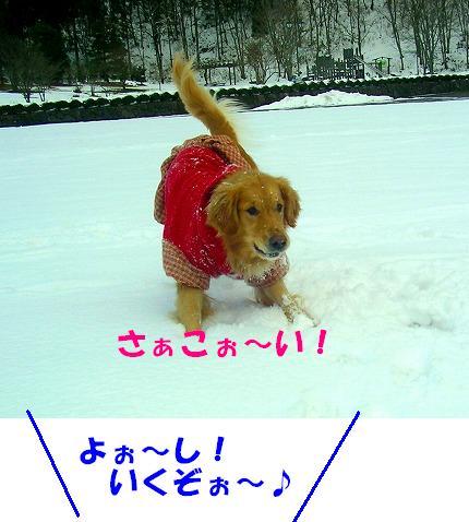 SANY0061_20090105132704.jpg