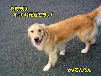 SANY0063_20090817172242.jpg