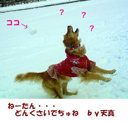 SANY0068_20090105132920.jpg