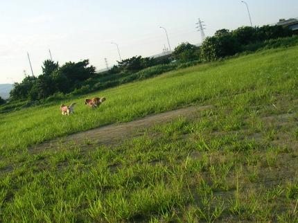 SANY0075_20090730200405.jpg