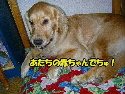 SANY0076_20090303204518.jpg