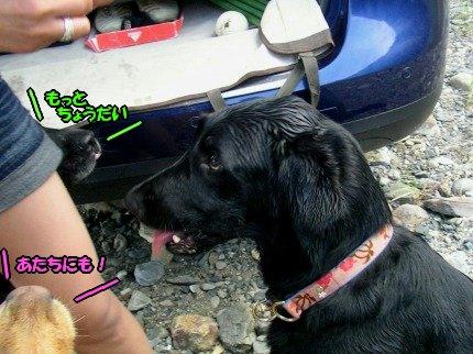 SANY0096_20090813193310.jpg