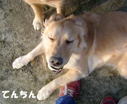 SANY0104_20090205224032.jpg