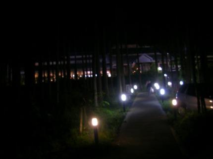 SANY0128.jpg