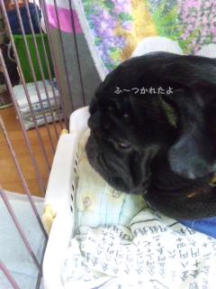 moblog_2260ee6f.jpg