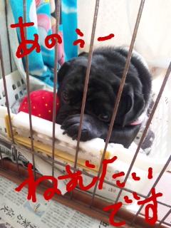 moblog_4109f84b.jpg