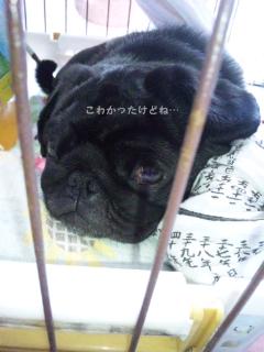moblog_599cb76e.jpg