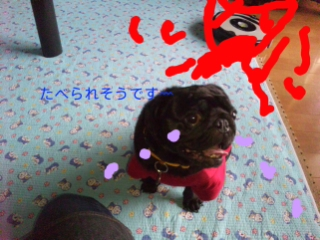 moblog_8b910533.jpg
