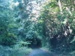 森のトンネル。