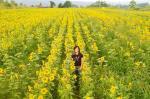 ヒマワリ畑