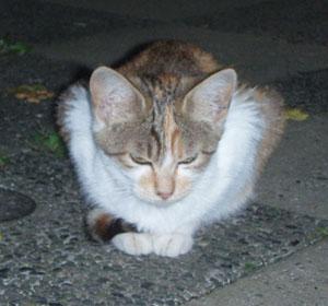 内田仔猫1