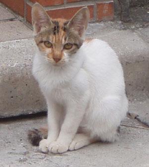 内田仔猫2