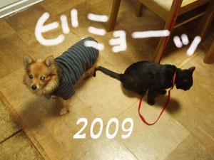 ココとモカ2009