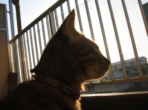 2009.2.22小梅3