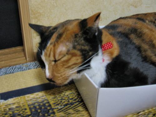 2010.7.25テト4