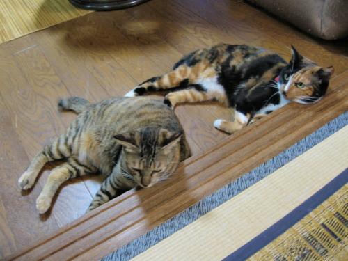 2010.7.27テト・小梅6