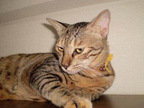 2010.9.22小梅3