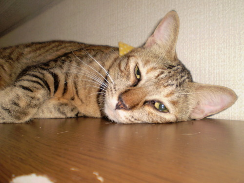 2010.9.22小梅4