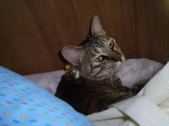 2011.2.4小梅3