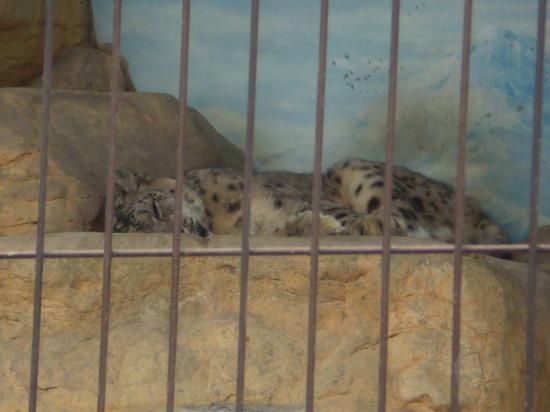 2011.4.16動物園1