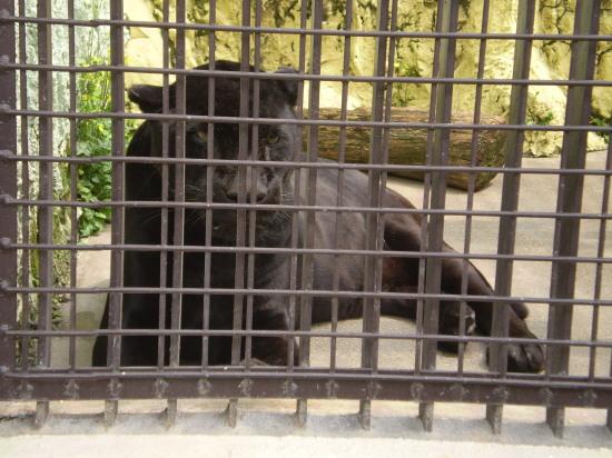 2011.4.16動物園2
