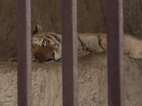 2011.4.16動物園4