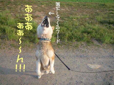ぱくっ03