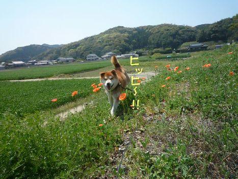 ふぐちゃんと雑草04