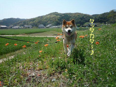 ふぐちゃんと雑草05