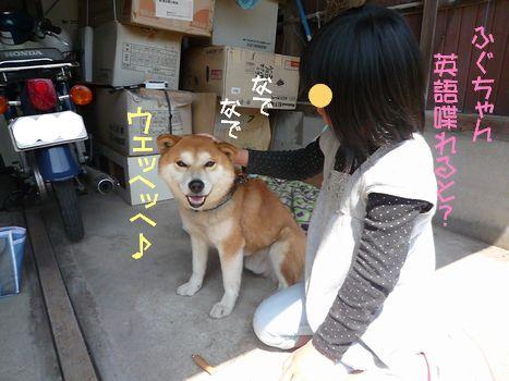 ふぐちゃんと雑草06