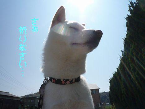 ふぐちゃんと雑草07