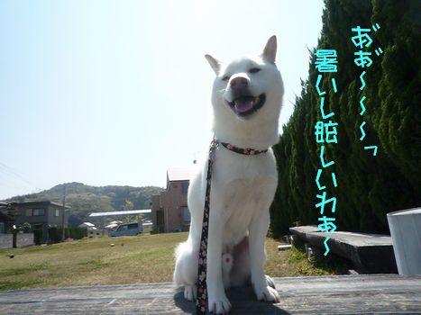 ふぐちゃんと雑草08