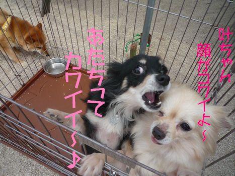 怜ちゃん叶ちゃん05