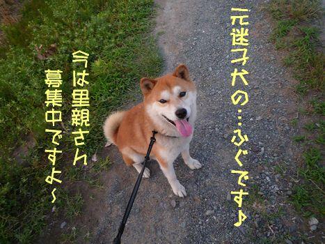 元迷子犬ふぐちゃん01