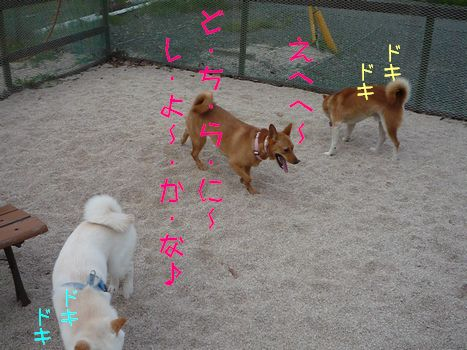 ケンケンちゃん品定め中?04