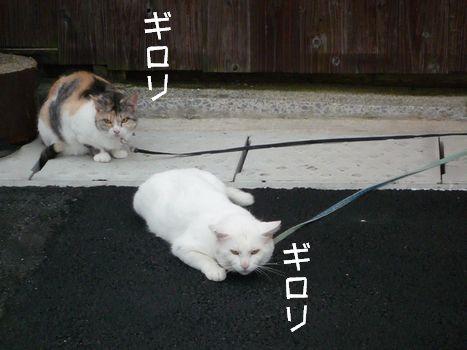 恐怖!01