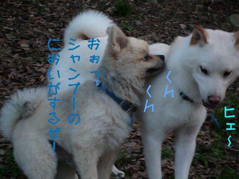 そらくんの報告~!03