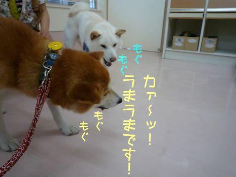 おいしいあじ ふぐちゃんもウマー(゜∀゜)02
