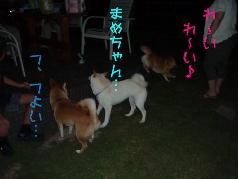 ゾーネでラン! まめちゃん最強説!!