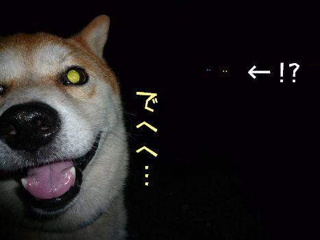お散歩夜の部 ついに、撮ってしまった...(怖)