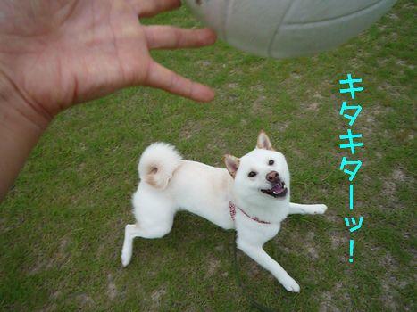 隣の芝生で ボールがキタキタ!