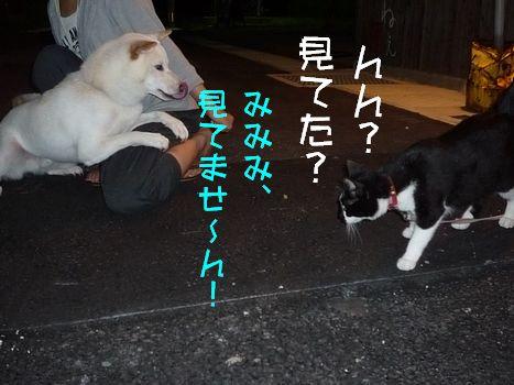 3ネコ とっさの嘘。。