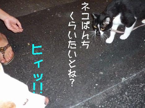 3ネコ びびりん坊将軍あじ