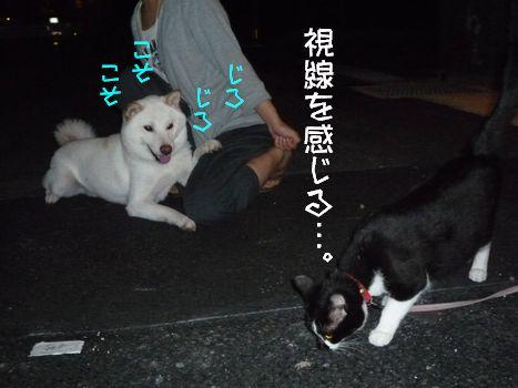 3ネコ こっそり見るもバレバレ!