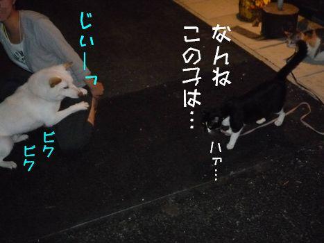 3ネコ 困ったときの膝の上~
