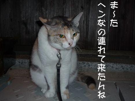 3ネコさま あだ名は「横綱」