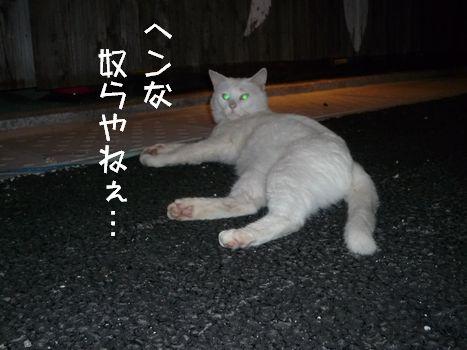 3ネコ② あ、ごもっともですね(汗)