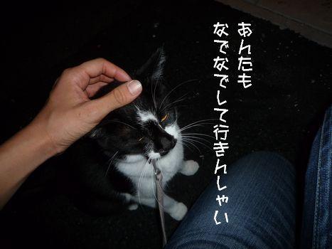3ネコ② ネコ様なでなで